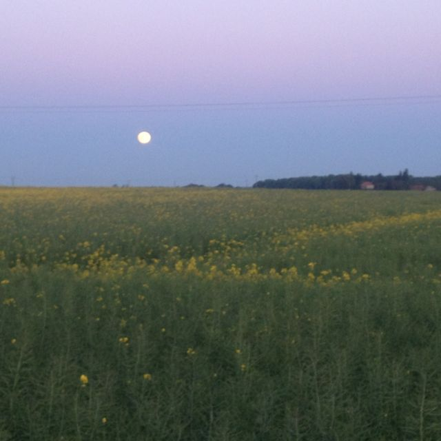 Moon over Pozières